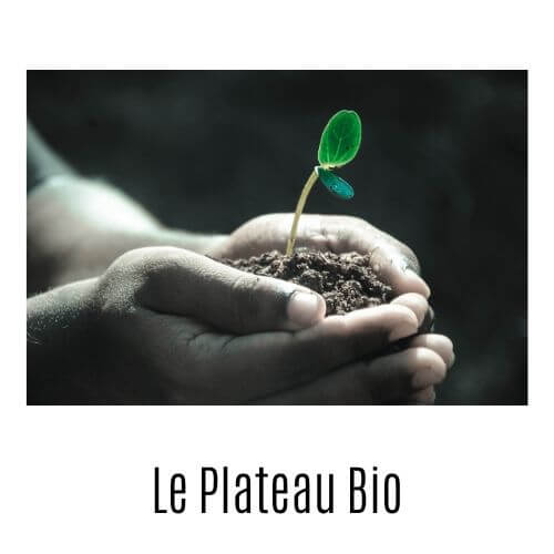 Plants & légumes